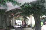 室内仿真榕树群