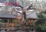 水泥桃花树