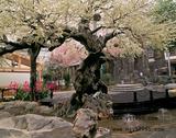 仿真梅花树